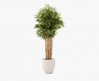 Topiary Bamboo Tree along with Pot H 204 cm