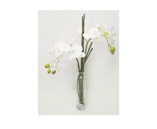 Orchid with Vase for your Home Space