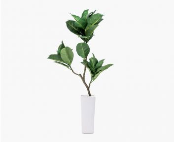 Small Quercus with Pot 45x100 cm