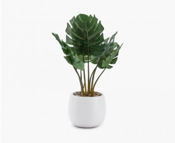 Small Philodendron Green